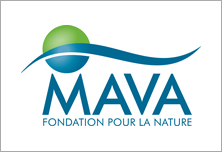 The MAVA Foundation